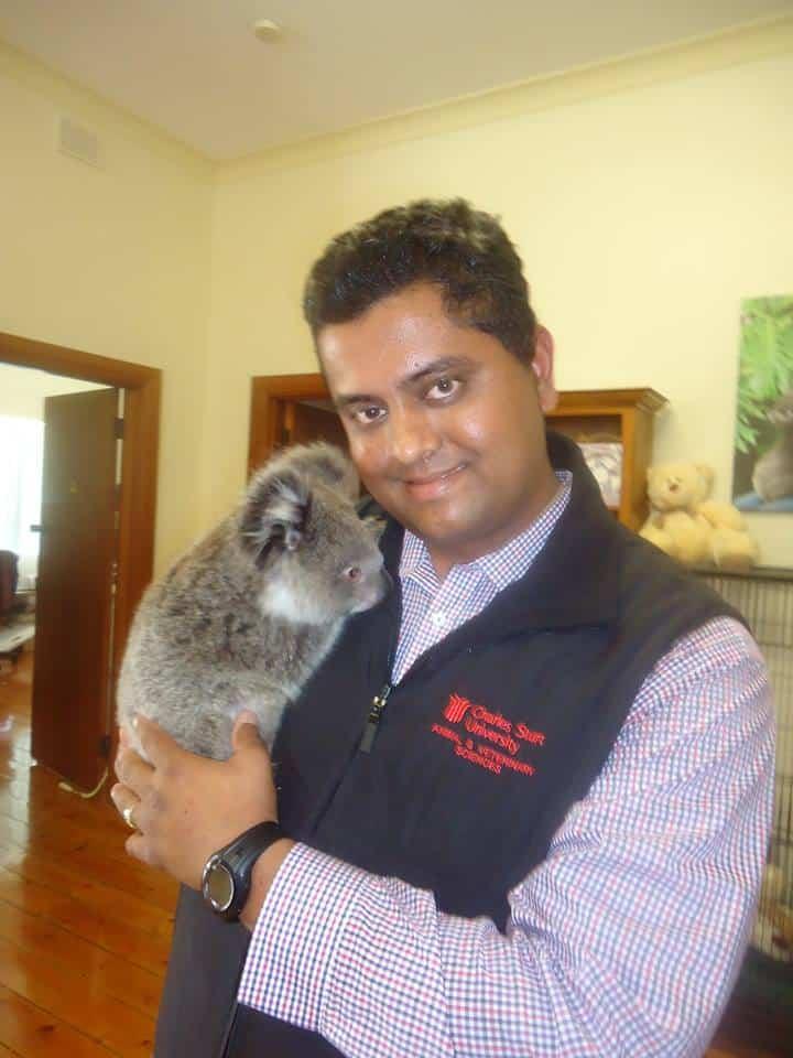 koalas1.Indian Link