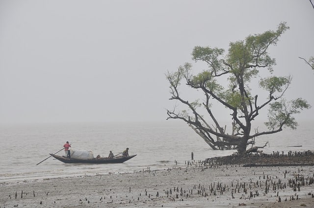 Gun Island1.Indian Link
